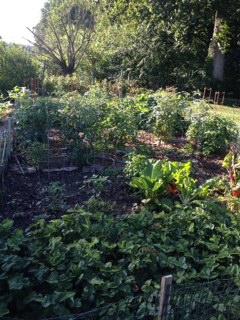 garden6-16-12a