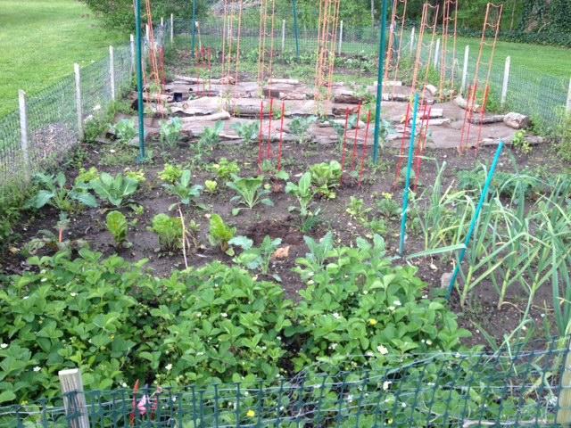 garden update 5-11