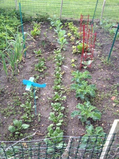 garden update 5-11a